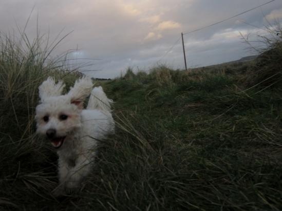 Casper running